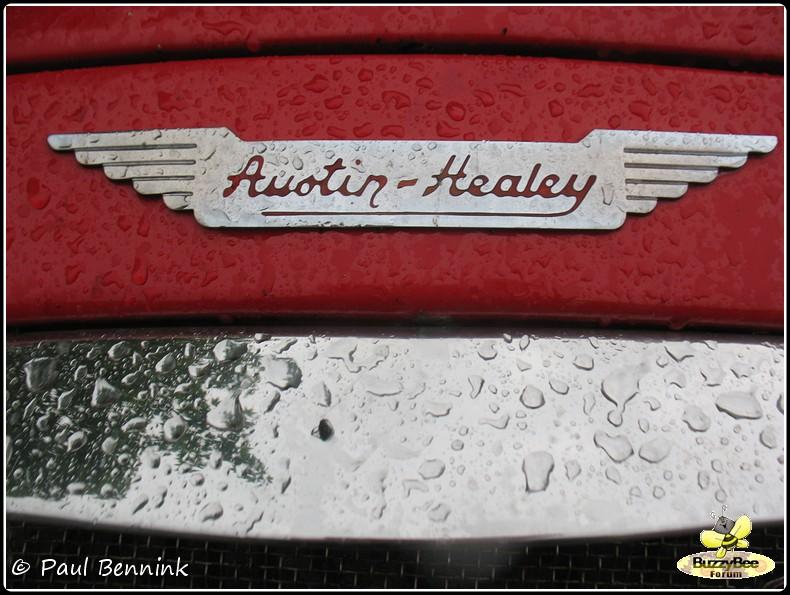 Austin Healey 100 (3)-BorderMaker -