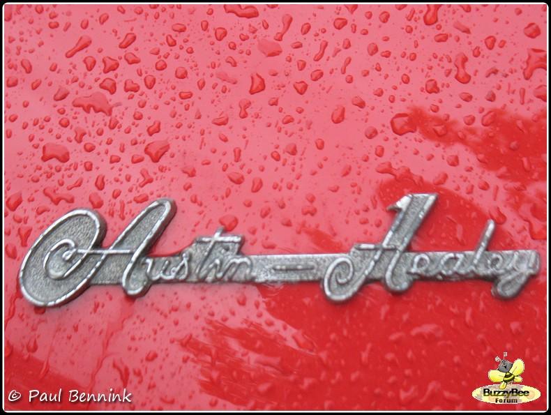 Austin Healey 100 (6)-BorderMaker -