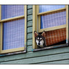 Cumberland Window Dog - Comox Valley