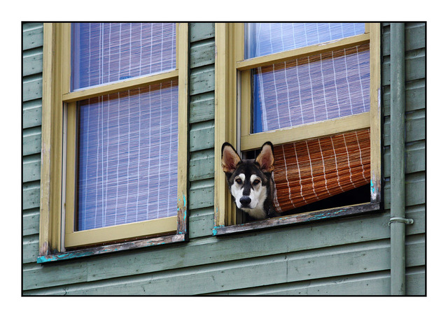 Cumberland Window Dog Comox Valley