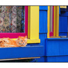 Cat House - Comox Valley