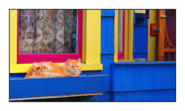 Cat House Comox Valley