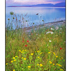 GooseSpit SundownFlowers - Landscapes