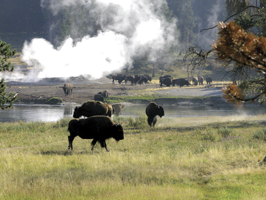 Yellowstone 1001 LR -