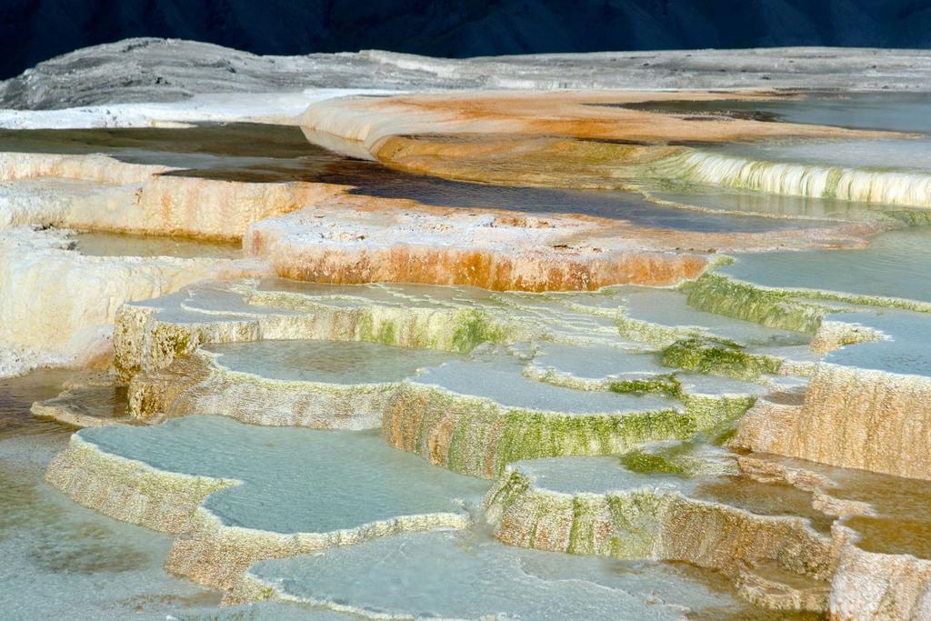 Mammoth Hot Springs Plateau -