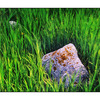 Rocks in the Grass - 35mm photos