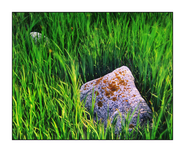 Rocks in the Grass 35mm photos