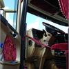 dsc 5768-border - Open dag JJ Truck