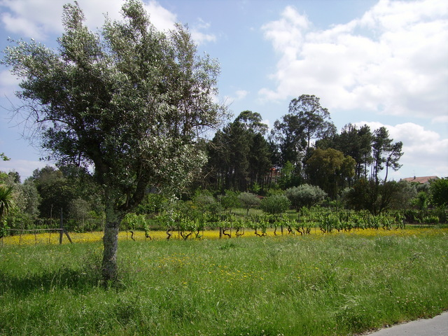 IMGP1273 Portugal Spring 2007