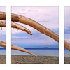 GooseSpit Driftwood Curves ... - Panorama Images