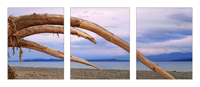 GooseSpit Driftwood Curves pano Panorama Images