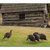 SaltSpring Ruckle Park - British Columbia Canada