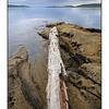 SaltSpring Arbutus Point 4 - Landscapes