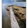 SaltSpring Arbutus Point - Landscapes