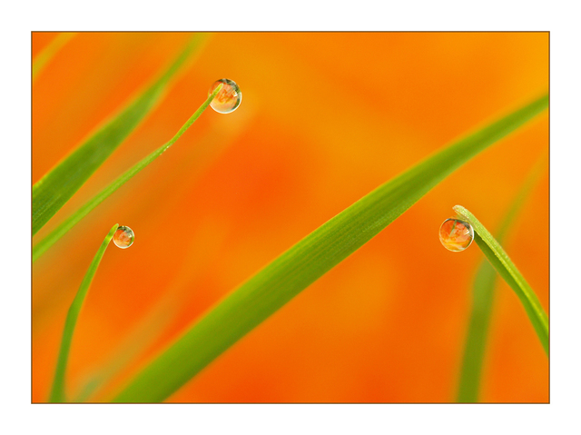 Three Droplets Close-Up Photography