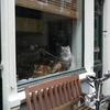 P1060794 - amsterdamschoon