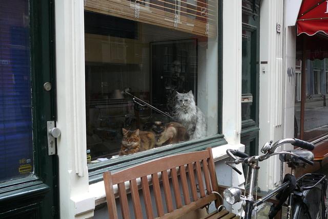 P1060794 amsterdamschoon