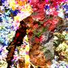 bjorn collage - Bjorn