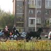 René Vriezen 2011-11-19#0611 - Sinterklaas en Pieten Presi...