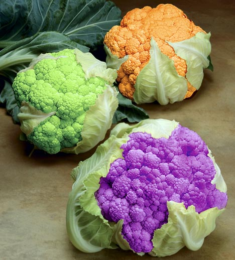 colorful-vegetables -