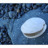 WhiteShelll BlueBeach - Close-Up Photography