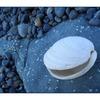 WhiteShelll BlueBeach - Close-Up Photography