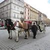 IMG 0449 - Zdjęcia z Polski 2012