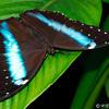 8 - Vlinders aan de Vliet