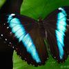 11 - Vlinders aan de Vliet
