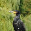 P1000550 - de vogels van amsterdam