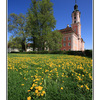 Birnau Church with field - Germany