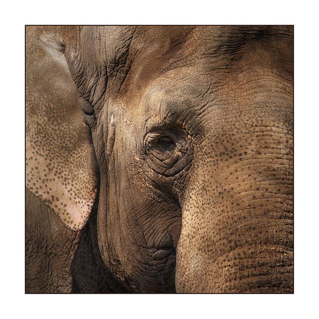 Berlin Elephant Germany