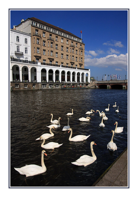 Hamburg swans Germany