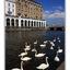 Hamburg swans - Germany