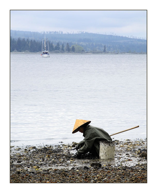 Oyster Farmer Vancouver Island
