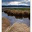Filberg Beach 04 2012 - Landscapes