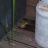 Tuin 08-06-08 - In de tuin 2008