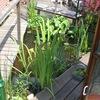 Tuin 27-05-08 08 - In de tuin 2008