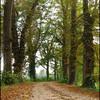 Herfst - Nature calls
