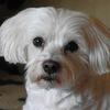Cindy 09-07-12 1 - Bij de achterburen