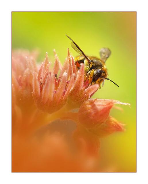 Backyard Bugs 1 2012 Close-Up Photography