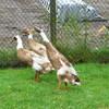 P1090714 - Papegaaienpark Veldhoven