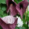 P1100440 - orchideëen