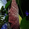 P1100445 - orchideëen