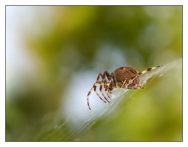 Backyard Spider 2012 4 Close-Up Photography