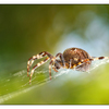 Backyard Spider 2012 2 - Close-Up Photography