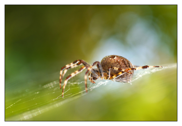 Backyard Spider 2012 2 Close-Up Photography