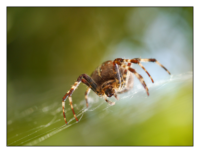 Backyard Spider 2012 3 Close-Up Photography