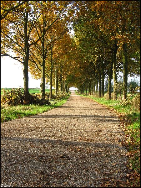 Herfst 1 Nature calls