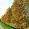 Herfst 3 - Nature calls